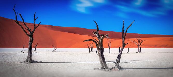 black leafless trees and vast land