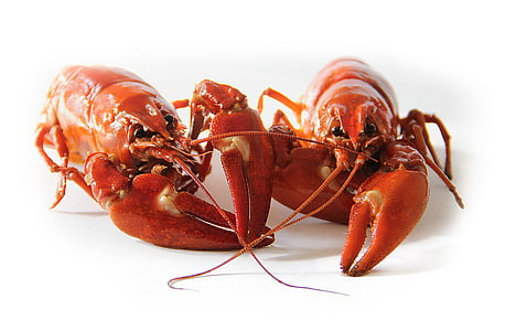 photo of two lobsters