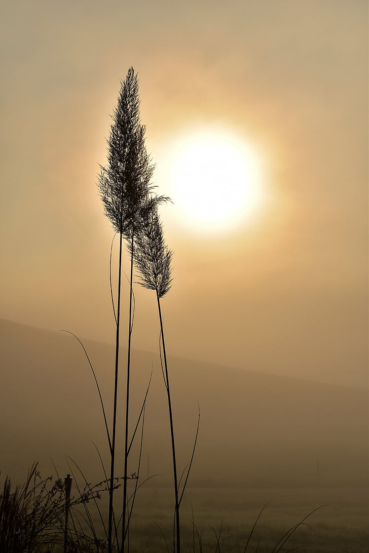 silhouette of grass at golden hour