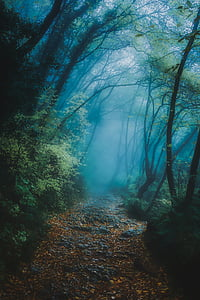 green forest trees photography