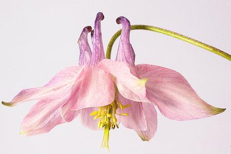 blooming pink petaled flower