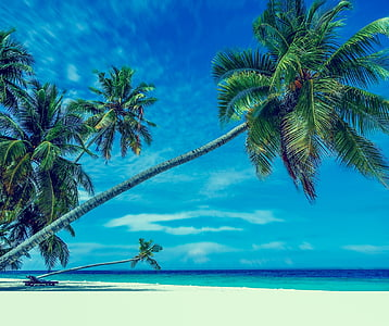 palm trees near seashore