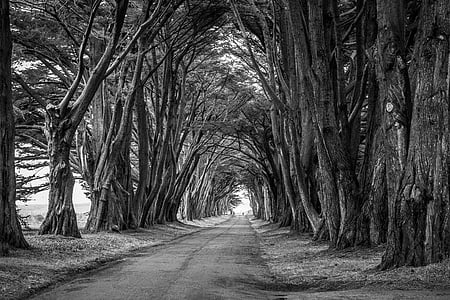 roadway in between trees grayscale photo