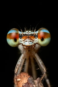 damselfly in closeup photo