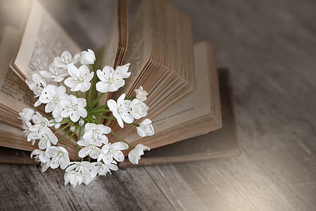 white flower on bible book
