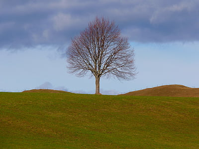 leafless tree on the green grass field during day time