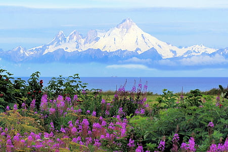 mountain surrounded by purple flowers