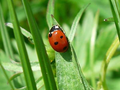 10 spotted ladybug