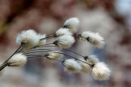 macro shot of white dandelion