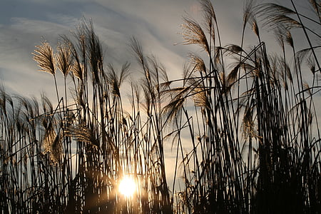landscape photography of leaf plant against sun light