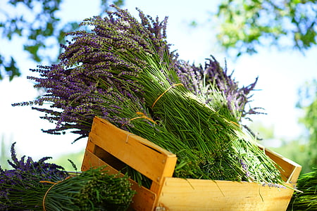 bundle of lavender flowers on yellow wooden crate