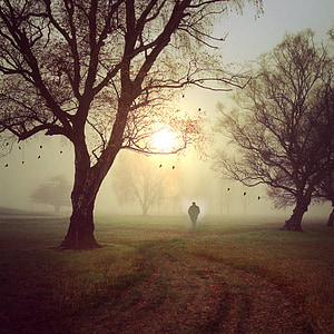 silhouette of person standing near trees