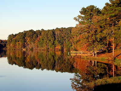 body of water near high trees during daytime