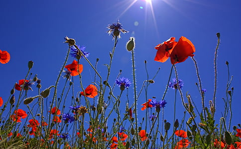 red clustered flower under blue sky