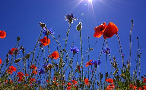 red clustered flower under blue sky