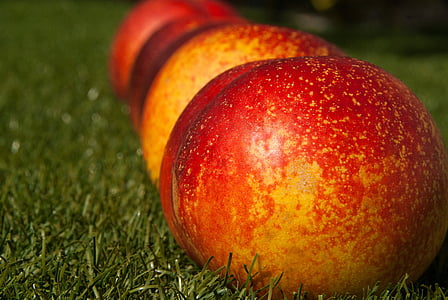 depth of field photography of apples on green grass