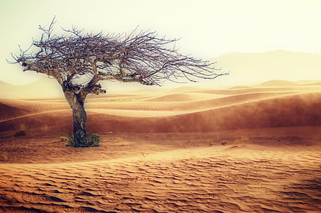 photo of leafless tree on desert