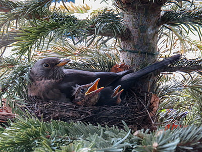 black birds on nest in closeup photography