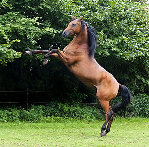 wildlife photography of brown and black horse