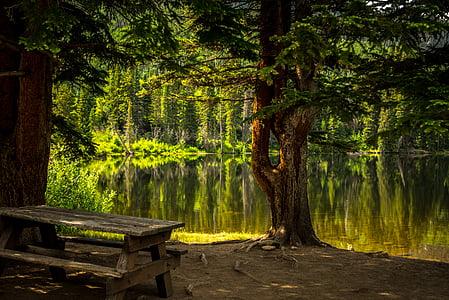 green tree near lake