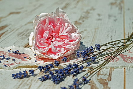 pink clustered flower and purple lavender