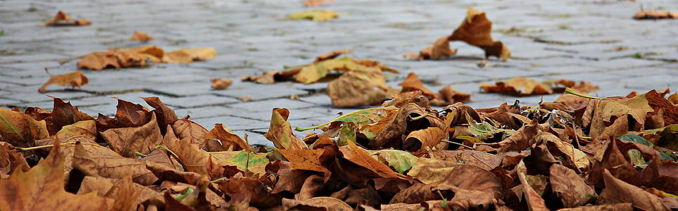 closeup photography of dried leafs near body of water