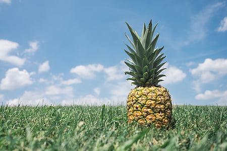 green pineapple on green field