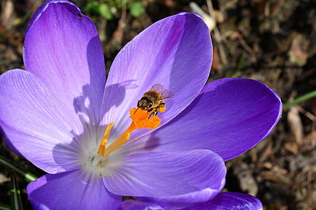 bumble bee perching on purple flower in close-up photography during daytime