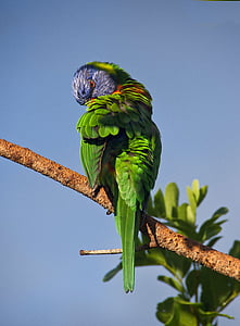 photo of green bird on top of brown tree branch during daytime