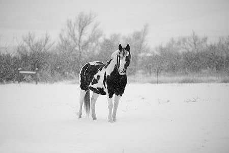 white and black horse on snow