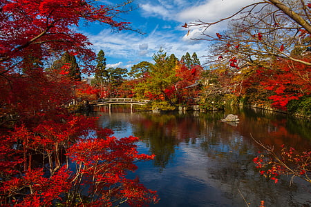 photography of body of water near red leaf tree
