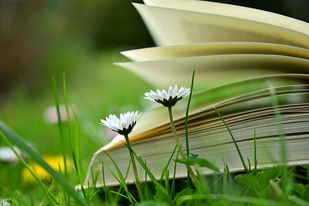 selective photography of two white petaled flowers against unfold book