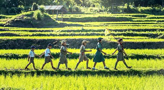 six children scout walking on rice field