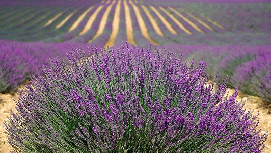 purple petaled flowers field