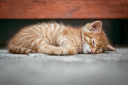 close up photography orange tabby kitten