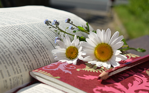 white daisy flowers on top of book at daytime
