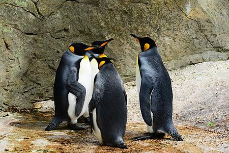 selective focus photography four penguins
