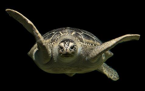 macro photography of sea turtle