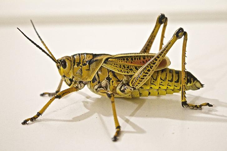 closeup photo of green and black grasshopper