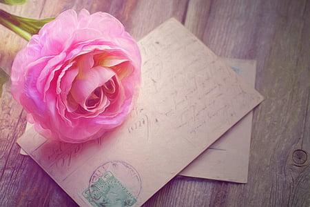 pink petaled flower on brown letter card