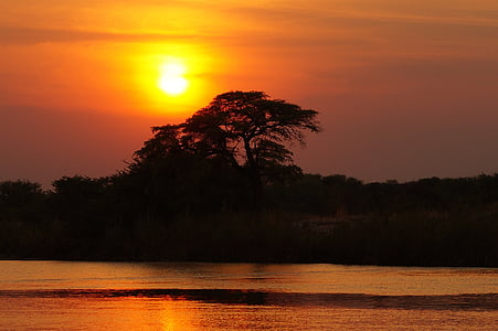 photo of tree silhouette with sunset background