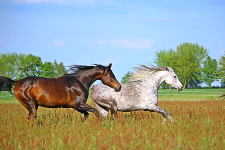 two horse galloping on grass field