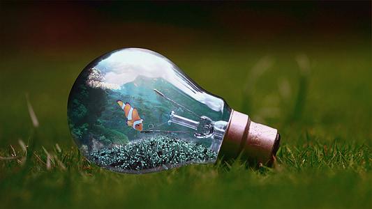 focus photo clownfish themed glass bulb