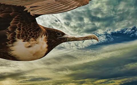 brown and white bird flight under blue sky