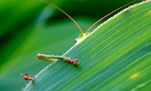 green grasshopper on green leaf plant