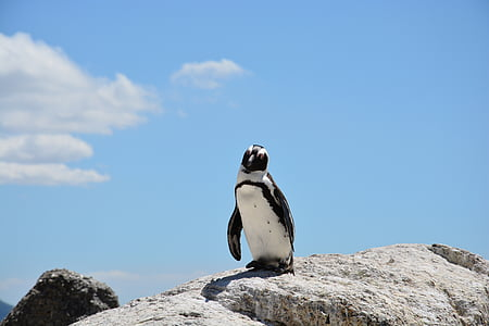 penguin stands on rock at daytime