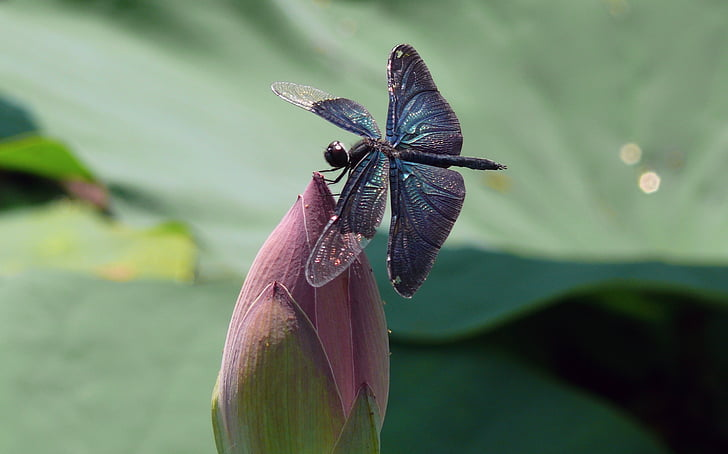blue damsel dragonfly perching on pink flower during daytime