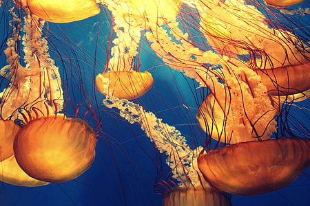 yellow and blue jellyfish painting