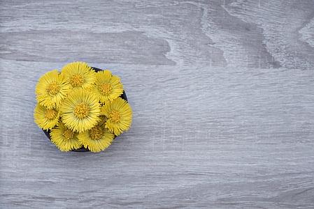 yellow petaled flowers on black pot