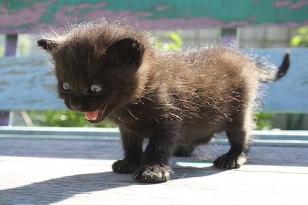 long-coated black kitten
